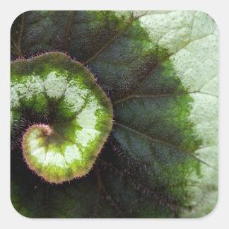 Snail Begonia Leaf Square Sticker