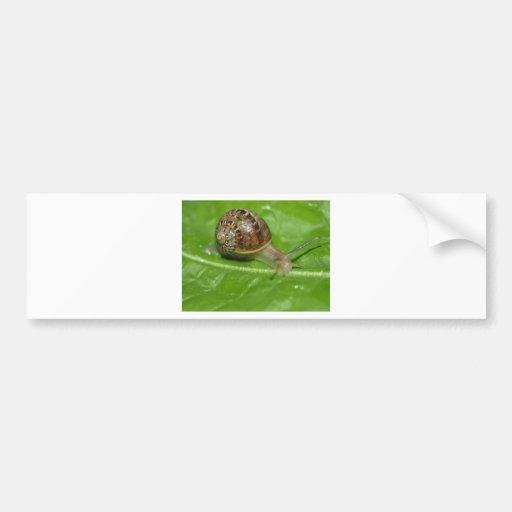 Snail Bumper Stickers