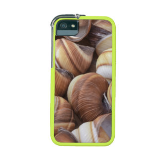 Snail iPhone 5 Cases