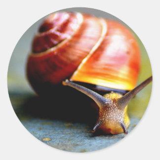 Snail Classic Round Sticker