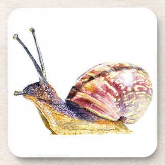 Snail Coaster