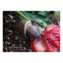 Snail Eats Strawberry Poster