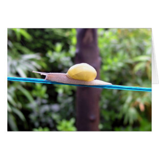 SNAIL EQUILIBRIST card Cards