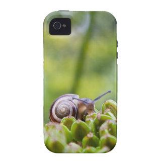 Snail face iPhone 4 case