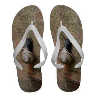 Snail Flip-Flops
