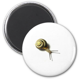 SNAIL FROM JUNGLEWALK.COM 2 INCH ROUND MAGNET
