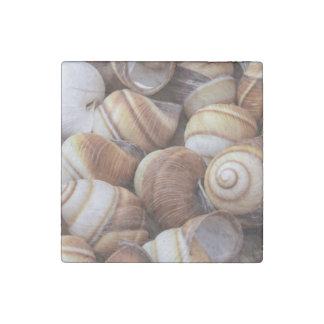 Snail Stone Magnet
