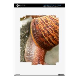 Snail iPad 3 Skin