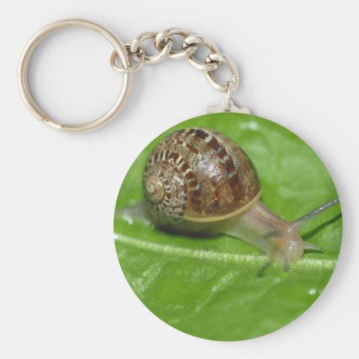 Snail Key Chain