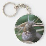 Snail Key Chains