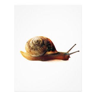 snail letterhead