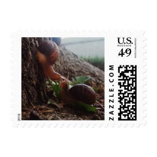 Snail Love Stamp