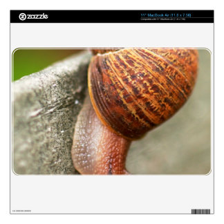 Snail MacBook Air Decal