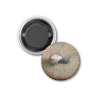 Snail magnet round refrigerator magnet