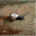 Snail magnet sculpture photo cut out