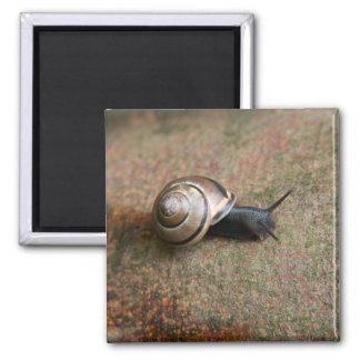 Snail magnet square magnets