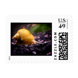 Snail Mail 2 Small Postage