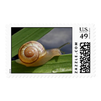 Snail Mail 96 ~ stamp