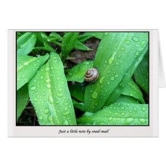 snail-mail card