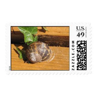 Snail mail envio