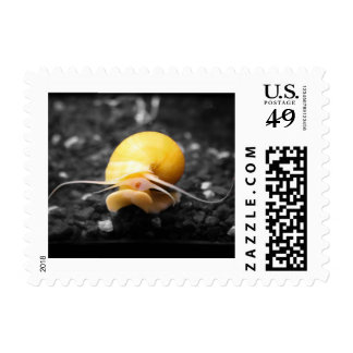 Snail Mail Small Postage Stamp