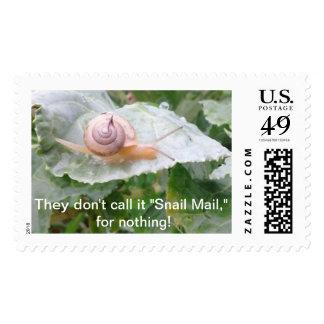 snail mail timbre postal