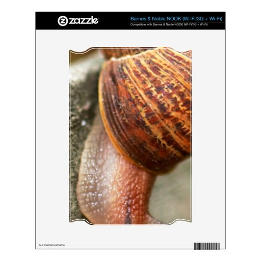 Snail NOOK Decal