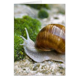 Snail of Burgundy Greeting Card