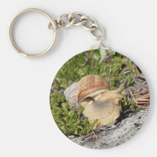 Snail of Burgundy in the french Alps Basic Round Button Keychain