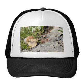 Snail of Burgundy in the french Alps Trucker Hat