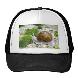 Snail of Burgundy Trucker Hat
