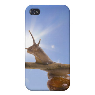 snail on a branch iPhone 4/4S cover