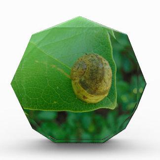Snail on a magnolia leaf award