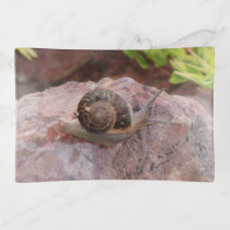 Snail on a Rock Trinket Trays