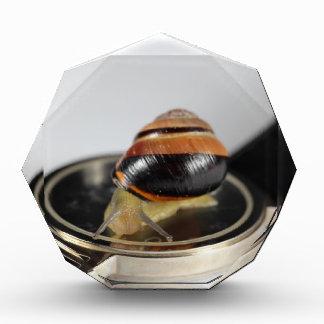Snail on a watch acrylic award