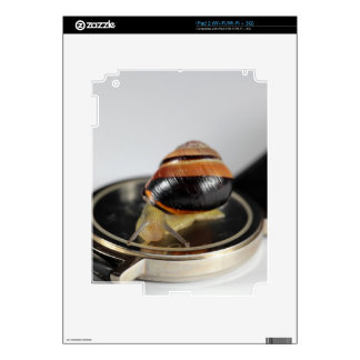 Snail on a watch iPad 2 decals