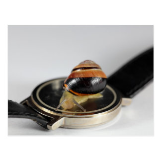 Snail on a watch postcard