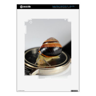 Snail on a watch skin for iPad 3