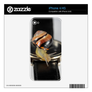 Snail on a watch skin for iPhone 4S