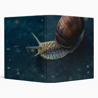 Snail On Blue Closeup, Nature Animal Photograph 3 Ring Binder