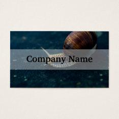 Snail On Blue Closeup, Nature Animal Photograph Business Card at Zazzle
