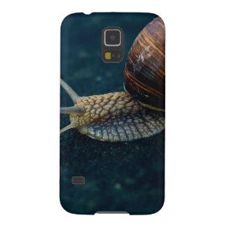 Snail On Blue Closeup, Nature Animal Photograph Galaxy S5 Case