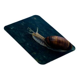 Snail On Blue Closeup, Nature Animal Photograph Magnet