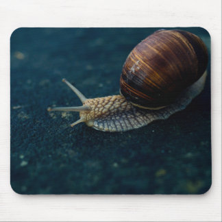 Snail On Blue Closeup, Nature Animal Photograph Mouse Pad