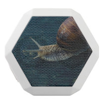 Snail On Blue Closeup, Nature Animal Photograph White Bluetooth Speaker
