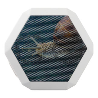 Snail On Blue Closeup, Nature Animal Photograph White Bluetooth Speaker