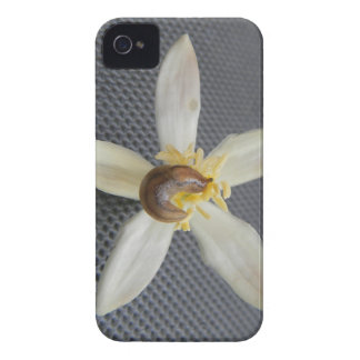 Snail on Orchid iPhone 4 Covers