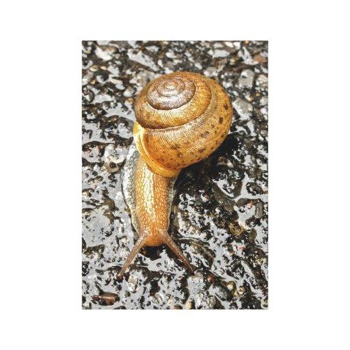 Snail on Pavement/Color Canvas Print