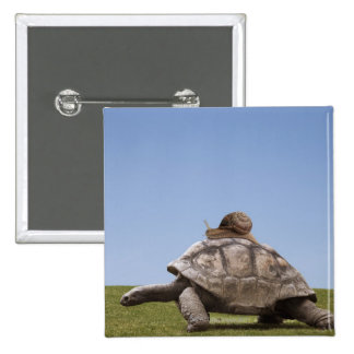 Snail over a turtle button