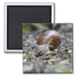 Snail Photo 2 Inch Square Magnet
